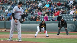 Bees and River Cats (Photo Rob Gray)