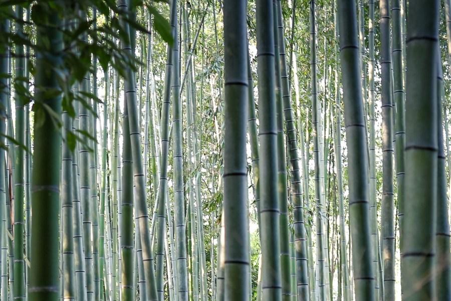 Arashiyama, avagy városrész a természet lágy ölén, valamint a híres bambuszliget