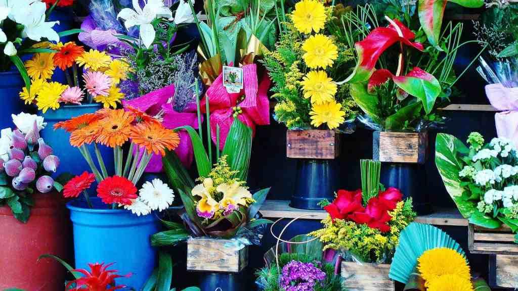 Blommor är avstressande.