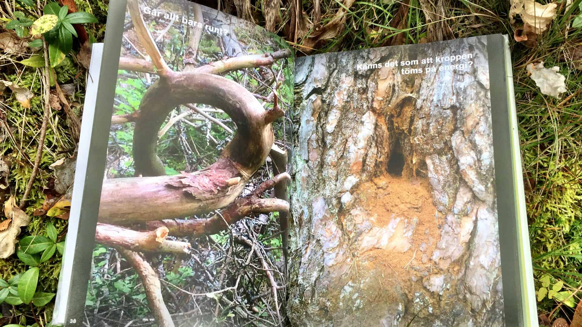 En fin bok om läkning i skogen.