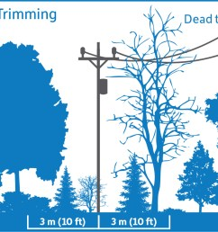 diagram showing before tree trimming vegetation is encroaching upon the 3 meter safe limits  [ 1236 x 730 Pixel ]