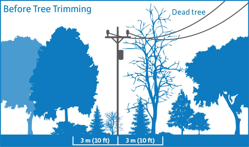 medium resolution of diagram showing before tree trimming vegetation is encroaching upon the 3 meter safe limits