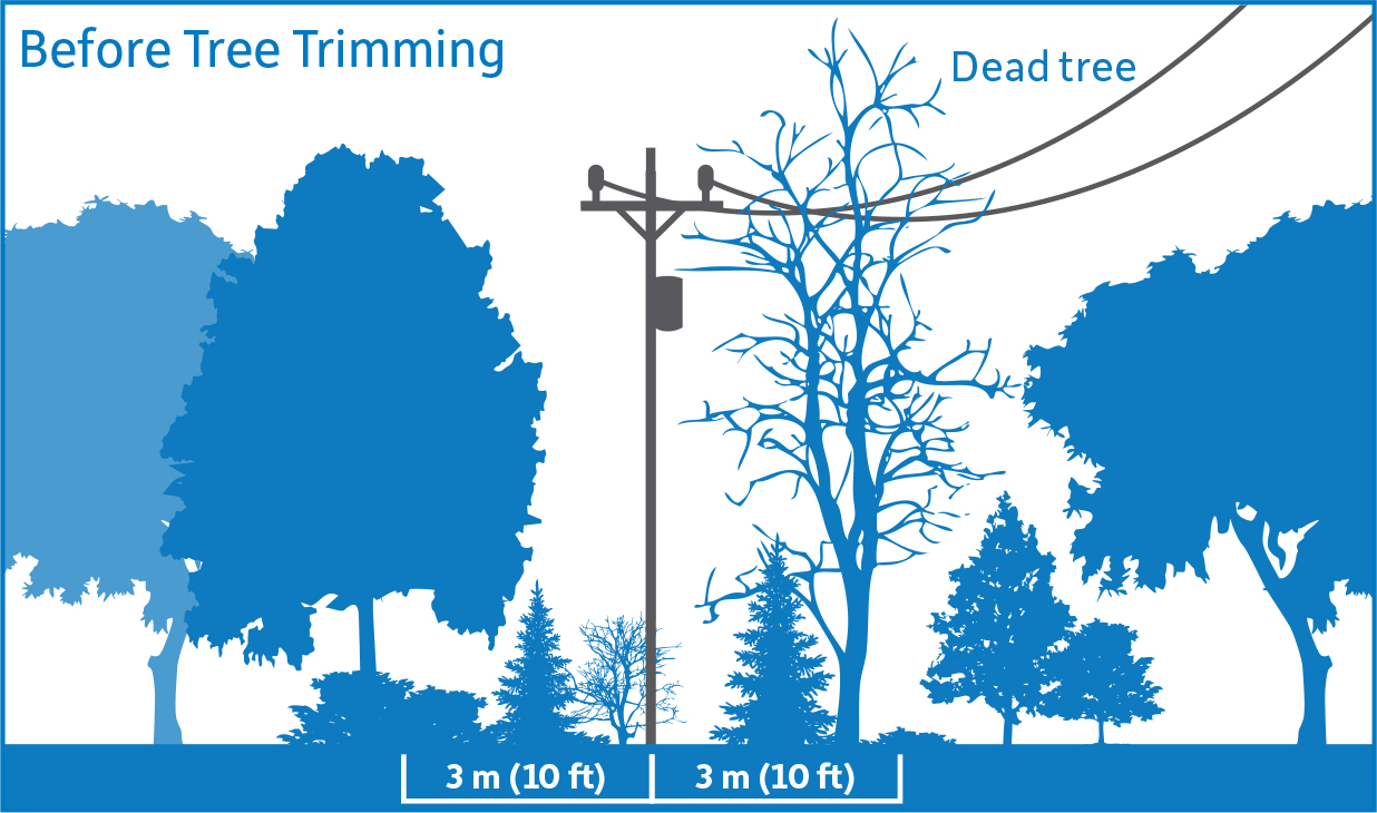 hight resolution of diagram showing before tree trimming vegetation is encroaching upon the 3 meter safe limits