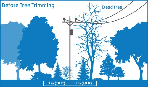 small resolution of diagram showing before tree trimming vegetation is encroaching upon the 3 meter safe limits