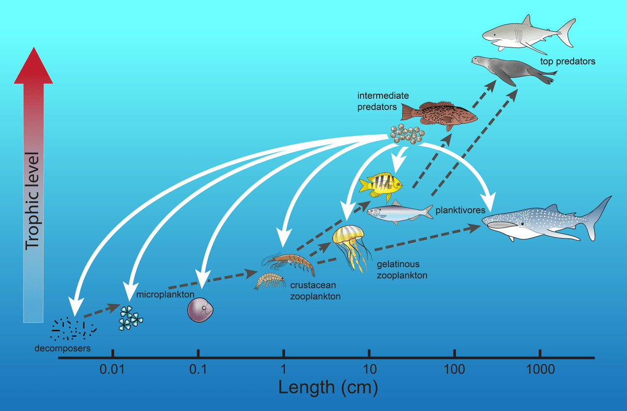 coral reef food chain diagram asco 7000 wiring fish eggs turn conventional view of ocean webs upside