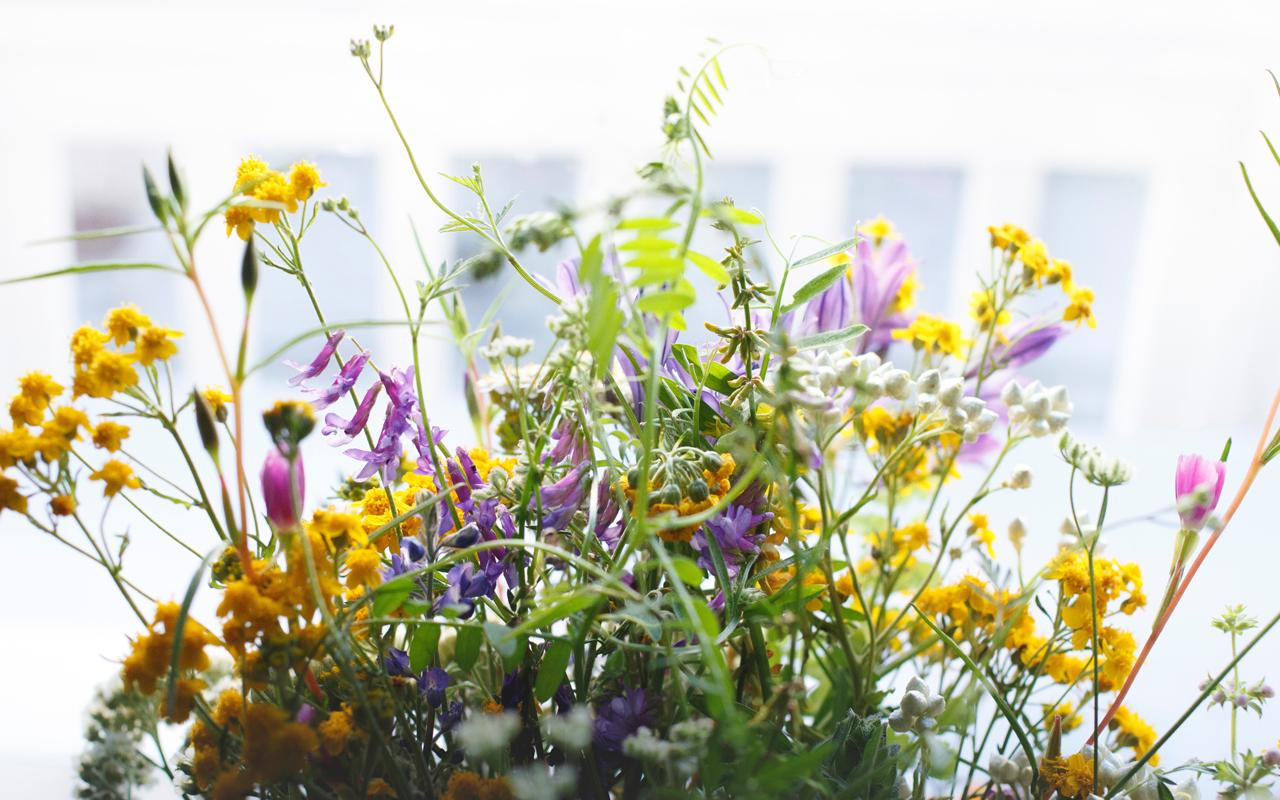 FairtradeBlumen und BioBlumen Der bessere Blumenstrau