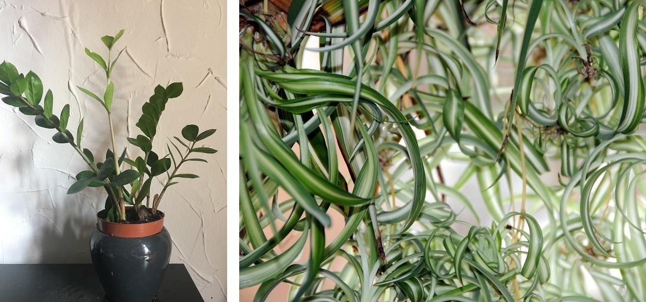 Zimmerpflanzen Bei Wenig Licht Diese 5 Wachsen Im