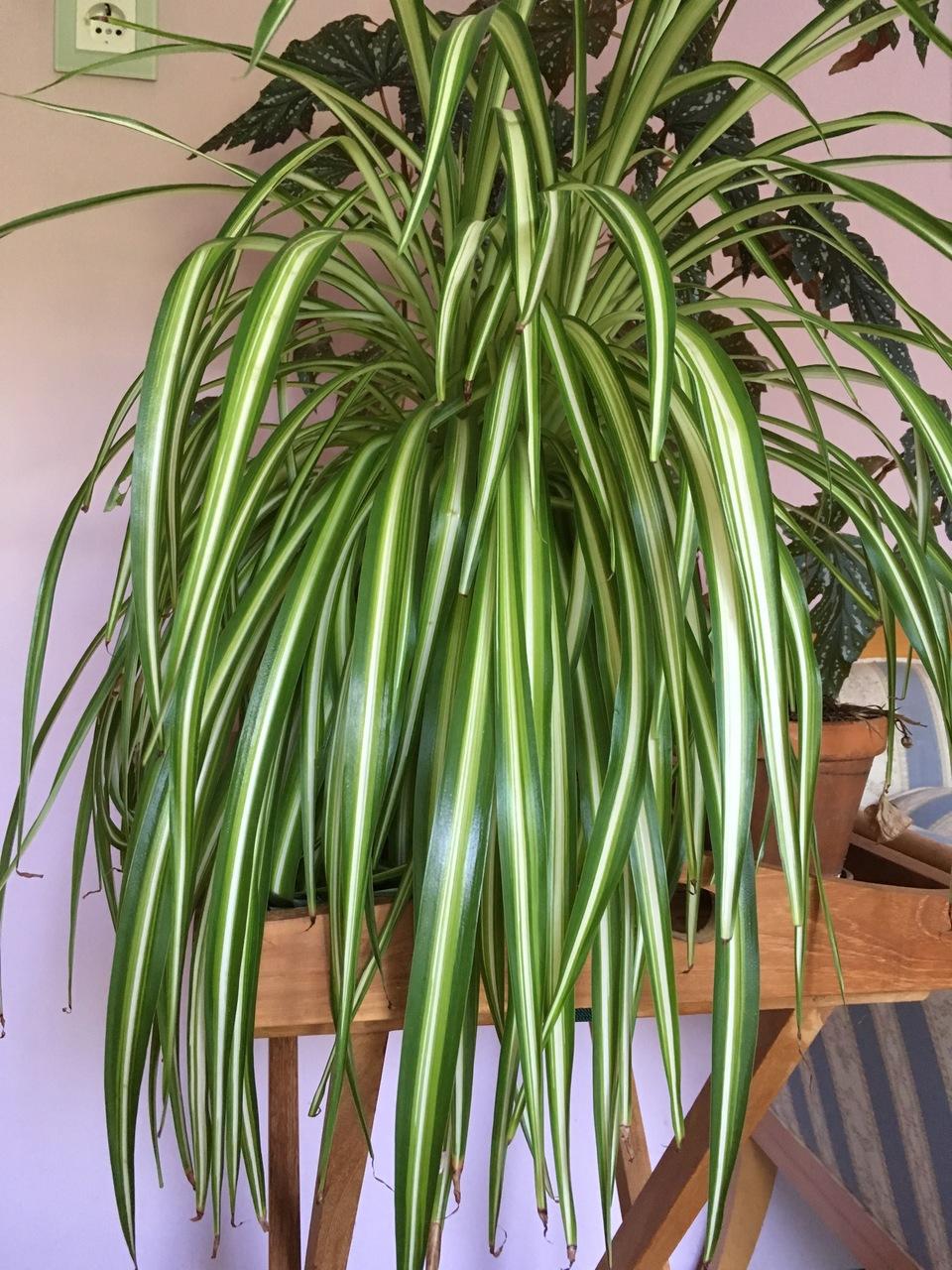 Pflegeleichte Zimmerpflanzen die auch ohne grnen Daumen