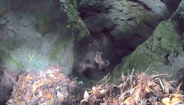 Dog rescued by hiker 3 weeks later