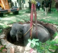Elephant-saved-from-well
