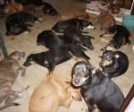Hurricane Dorian rescue dogs Chella Phillips