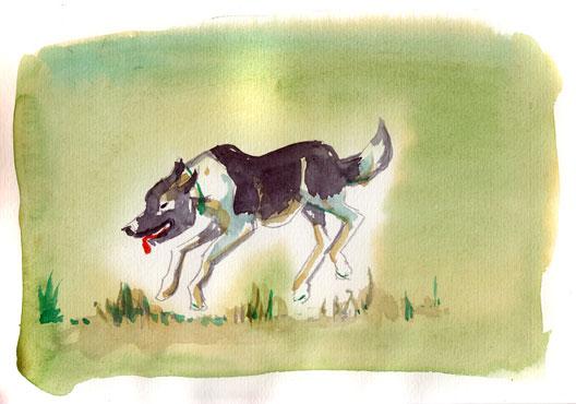 park-dog