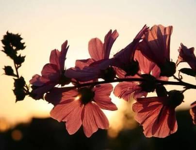 Flori: secretul inimii