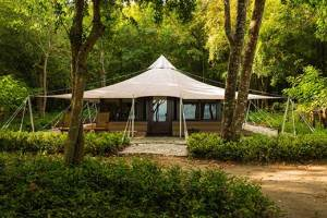 room_jungle-tent