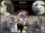 Tiger-memory2