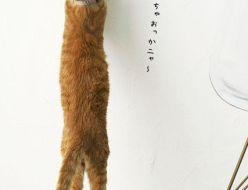 猫ひっかき傷