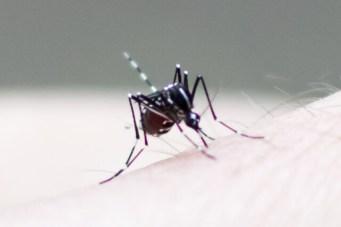 蚊 退治 部屋