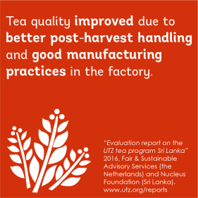 Impact on better crop in the tea sector in Sri Lanka
