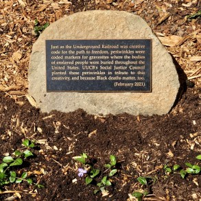 Picture of a plaque on a rock on the soil. The plaque reads: just as the Underground Railroad was creative code for the path to freedom, periwinkles were coded markers for gravesites where the bodies of enslaved people were buried throughout the United States. In February, UUCB's Social Justice Council began a project to plant a bed of periwinkles in tribute to this creativity, and because Black deaths matter, too.