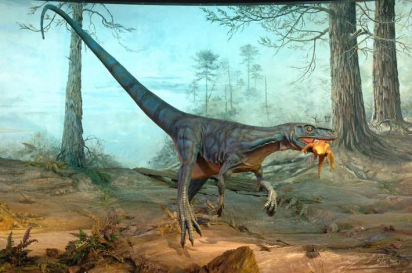 Resultado de imagen para Eoraptor lunensis