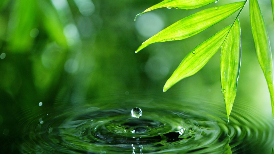 Dropping water with palm leaf