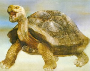 Painting of a Tortoise