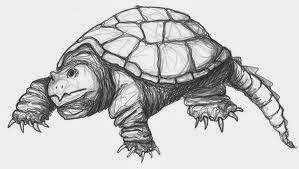 snapping_turtle_drawing – Swimming