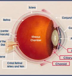 anatomy of the eye [ 1056 x 820 Pixel ]