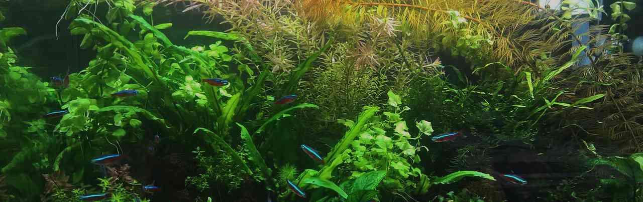 Жизнедеятельность водных растений