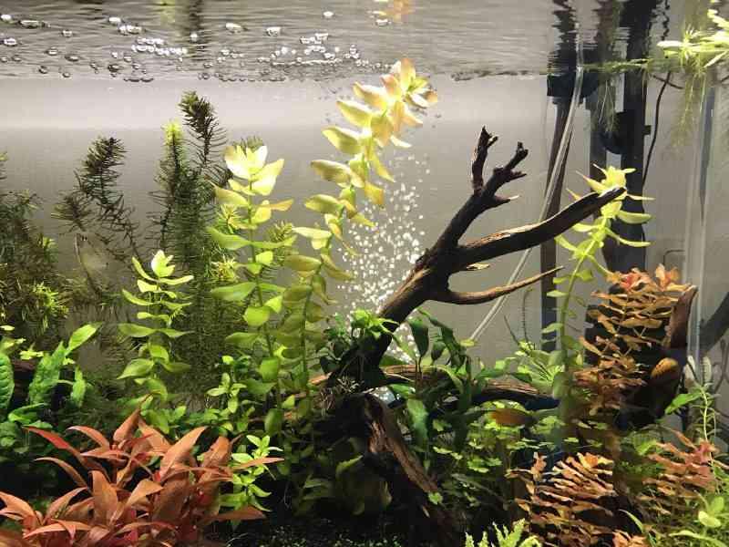 Влияние аэрации на концентрацию СО2 в аквариуме