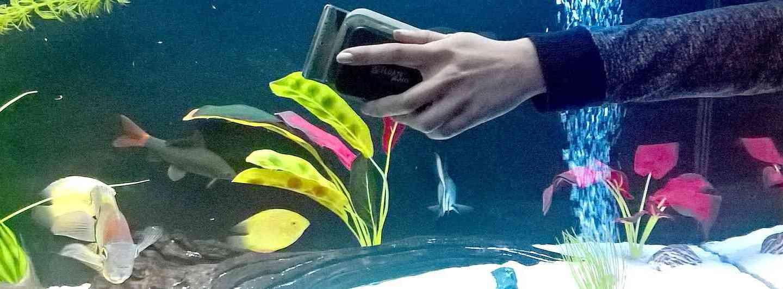 Чистка аквариумных стекол магнитным скребком