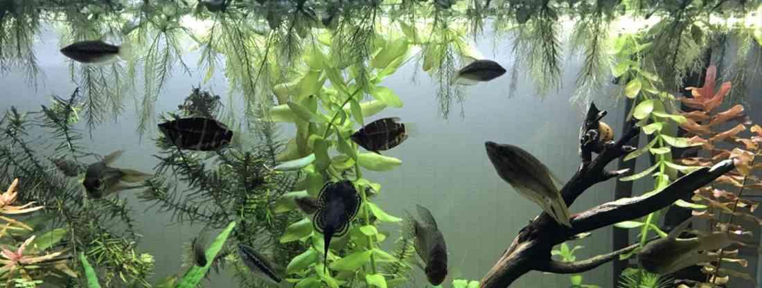 Регулярное обслуживание аквариума