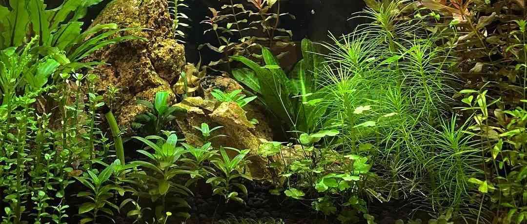 Растения тоже хотят кушать