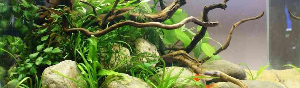 Основы оформления природного аквариума