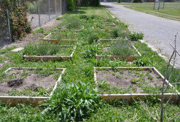 Gardens Before