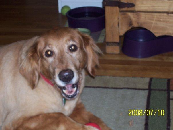 Lucy -- April 2000 - December 2011 (1/3)