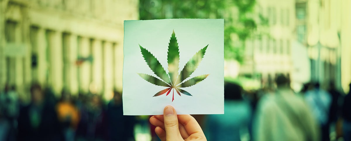 Hemp and Cannabis: Understand the Difference