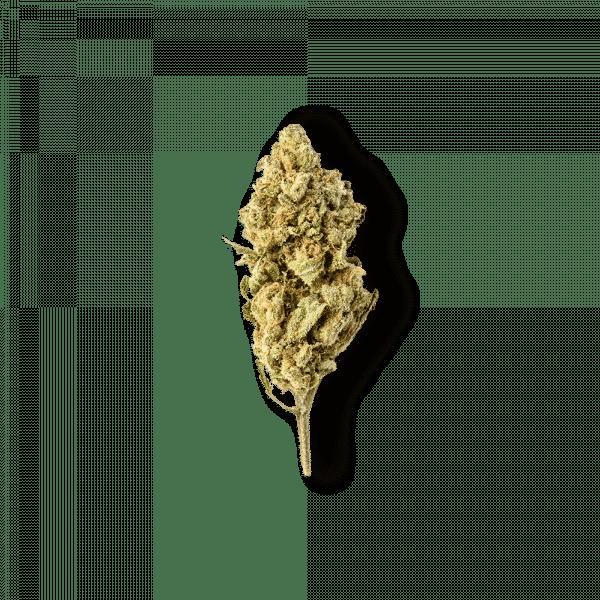 Green Passion Harlequin Popcorn 1, Petites Fleurs