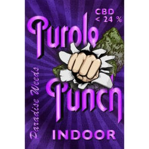 Paradise Weeds Purple Punch Indoor