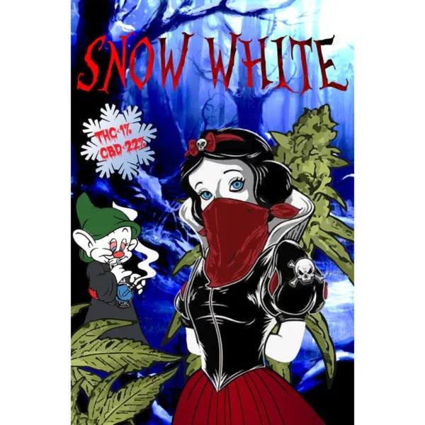Paradise Weeds Snow White Indoor, Fleurs CBD
