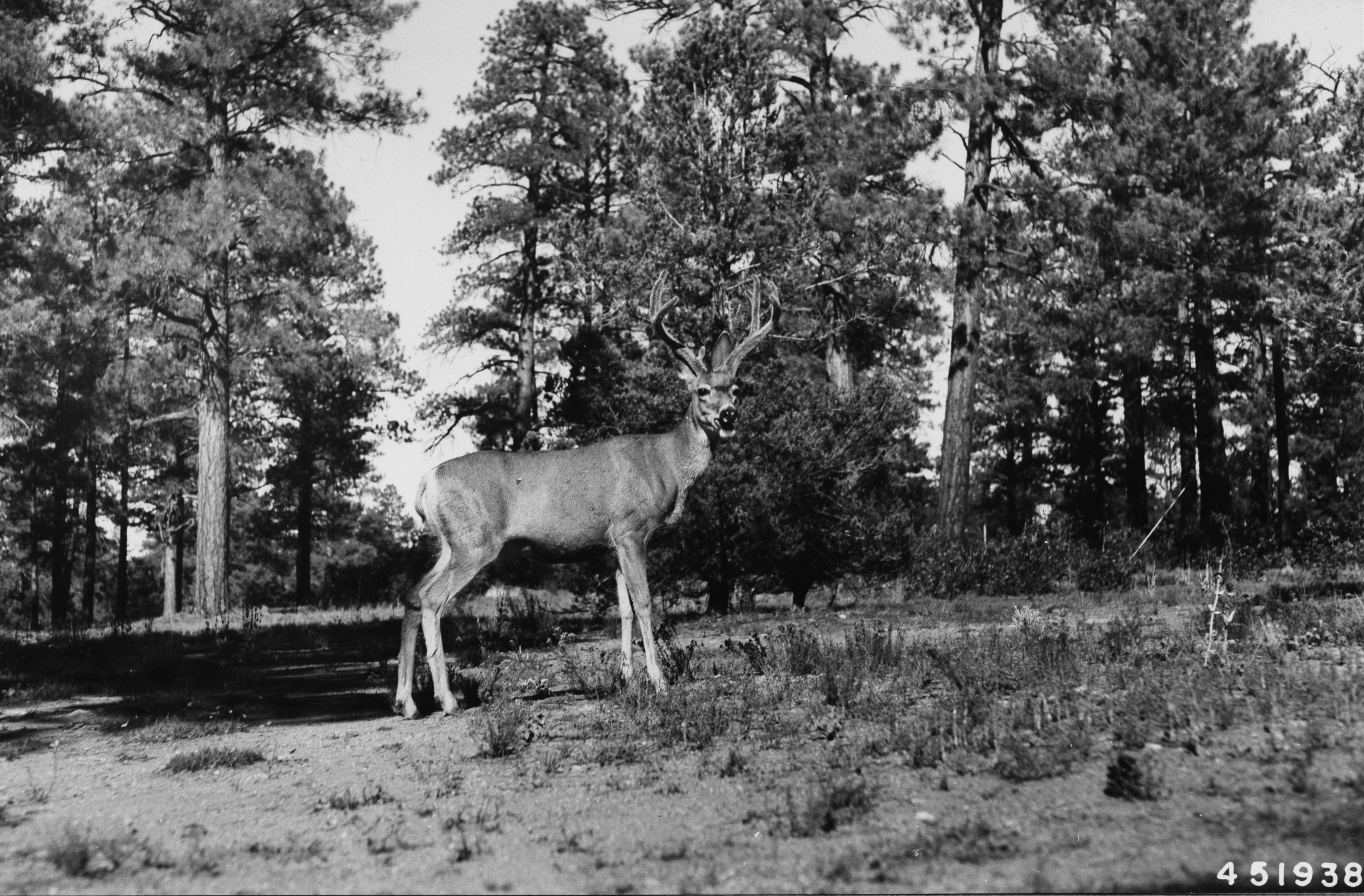 Wilderburbs And Wildlife In The American West A Q Amp A