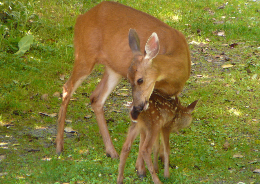 It's That Time of Year: FAWN SEASON!