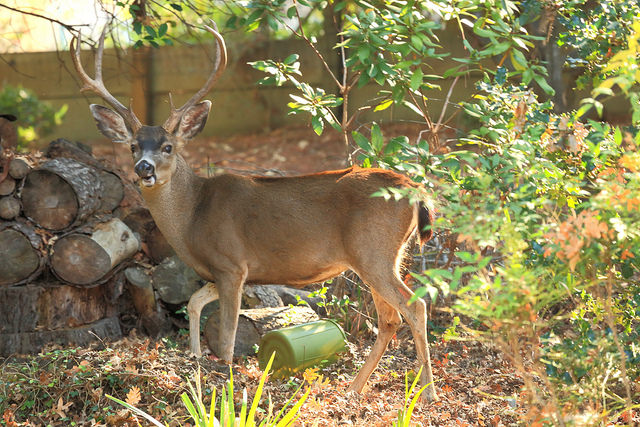 Photos are Helping With Deer Inventory