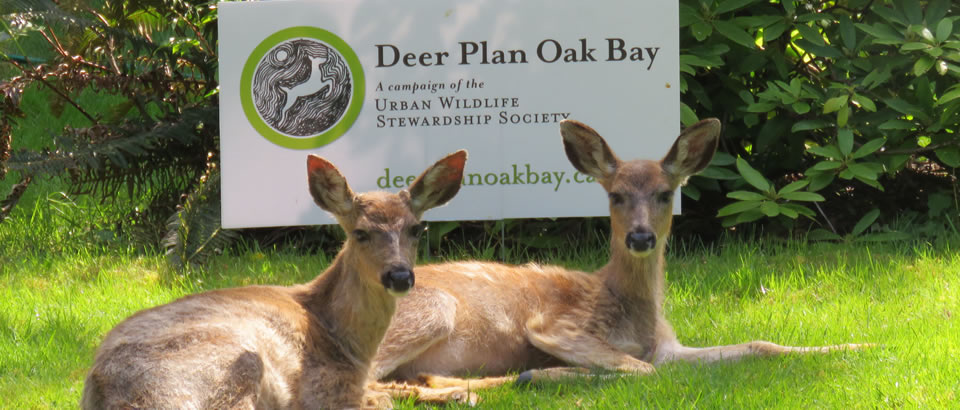 Scientific Approach Could Make our Region a Deer-Management Leader