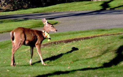 Deer oh Deer