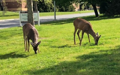 One deer, two deer, three deer…more?