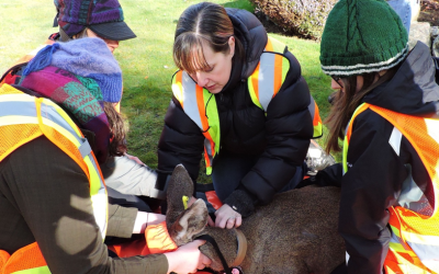 Living with Wildlife: the Oak Bay Deer study
