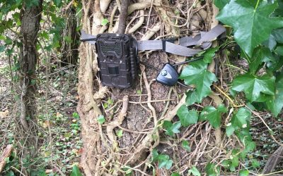 Camera thefts threaten innovative deer project