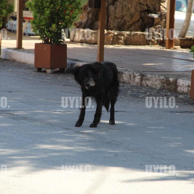 Black Dog Shaking