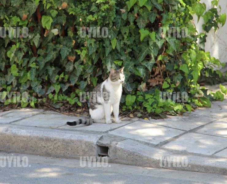 Cat on the Street Thinks